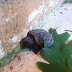 Baby turtle by the bathrooms